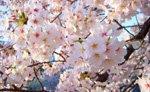 Japan - Weather: The Fall Season